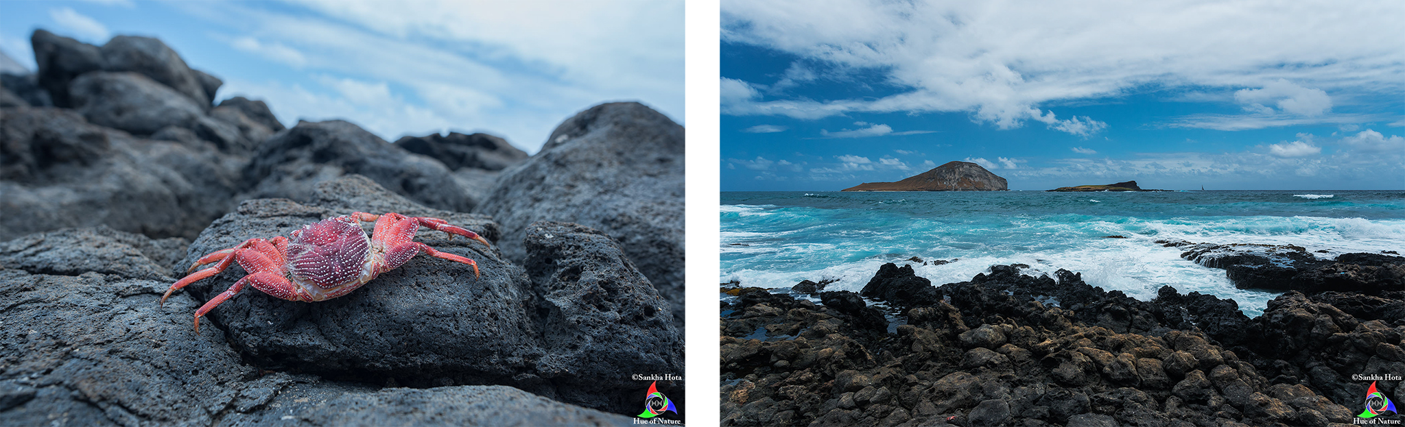 Crab Shell (left) and View of Rabbit and Kaohikaipu Islands (right) from Makapu'u Beach